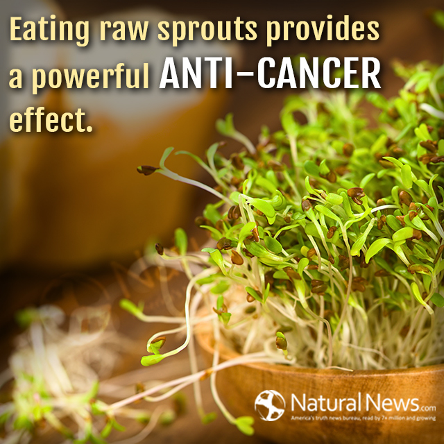 Eating raw sprouts provides a powerful anti-cancer effect