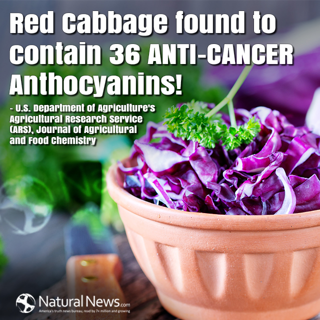 Red Cabbage found to contain 36 anti-cancer Anthocyanins!