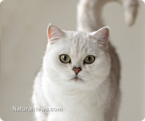 Does Kitty Litter Contain Harmful Substances
