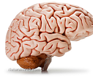 Foods that increase intelligence quotient image 3