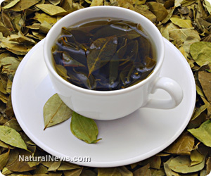 Green Tea Antioxidants Improve Memory, Cognition and Spatial Awareness