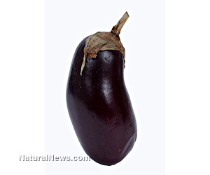 Genetically-modified eggplant found to be unsafe for human consumption, environment