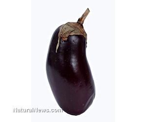 GM eggplant