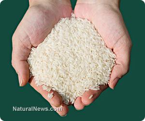 Lundberg rice