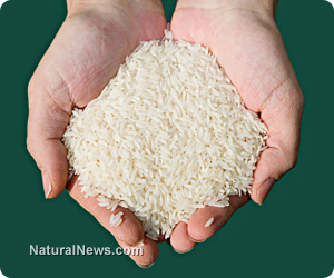Hands-Holding-White-Rice Unapproved genetically-modified rice trials in U.S. have contaminated the world's rice supply
