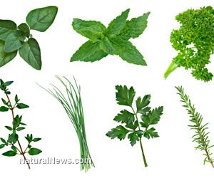 herbal medicine school california