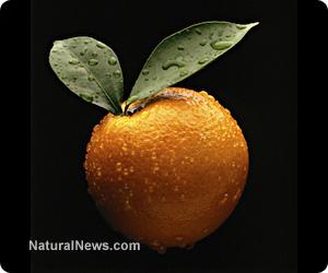 GM oranges