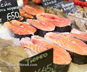 Fish protein