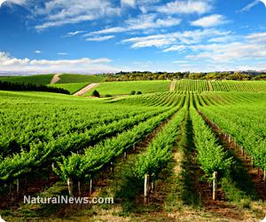 Organic winemaker