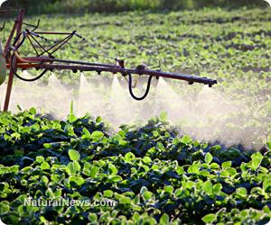 Herbicide-resistant superweeds