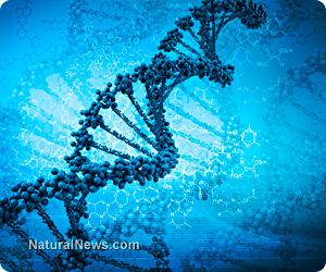 DNA transformation