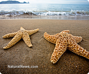 Starfish wasting disease