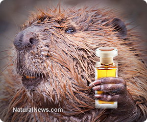Beaver Butt Used As Natural Flavoring In Your Food
