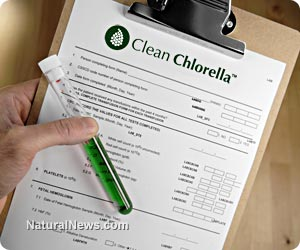 Clean chlorella