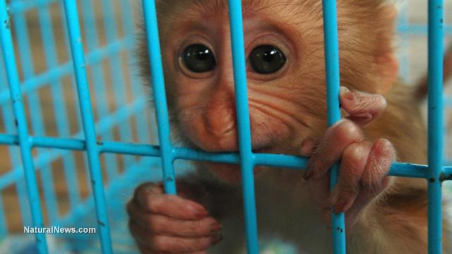 Autism study with monkeys
