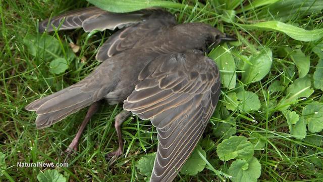 Bird poisoning