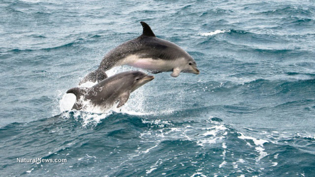 La Plata dolphins