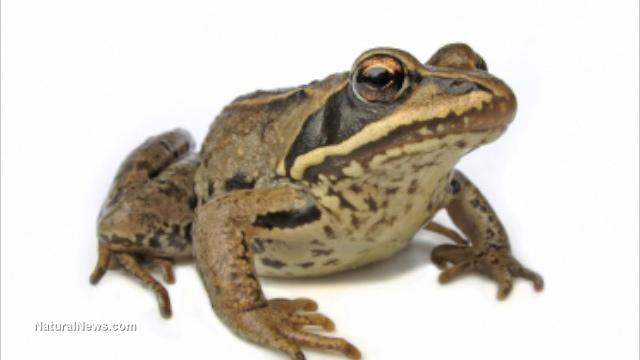Frog vaccines