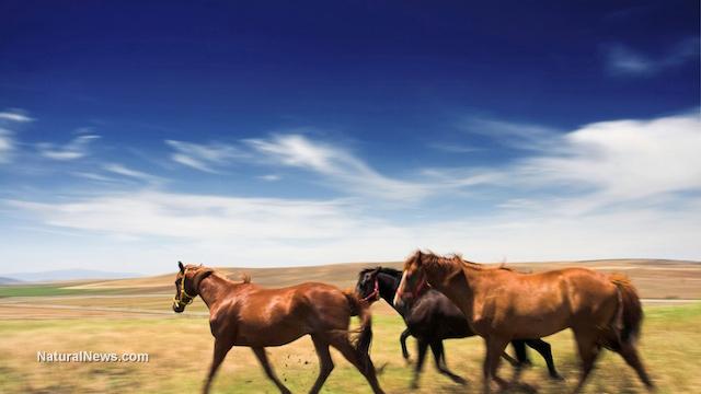 Horse virus