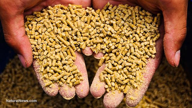 GMO feed