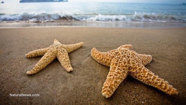 Starfish suicide