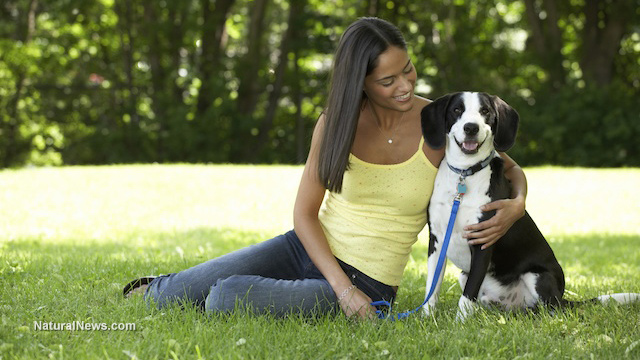 Dogs Feel Jealousy And Seek Attention Just Like Humans