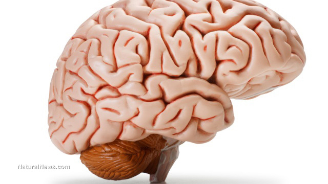 the brain news, articles and information:, Human Body