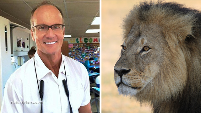 Cecil the Lion,trophy hunting,dentist Walter Palmer