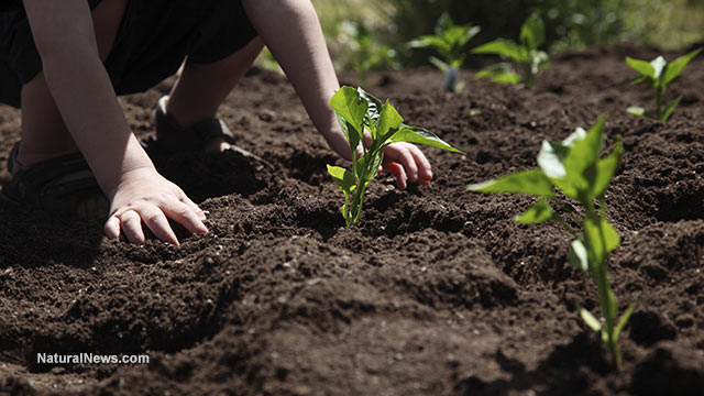 Soil news articles and information for Soil articles