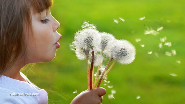 Dandelion news, articles and information: