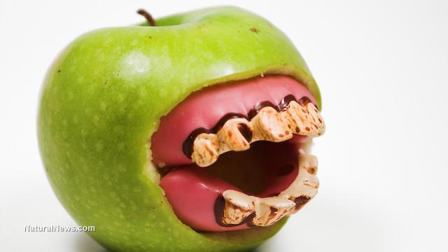 GMO apples