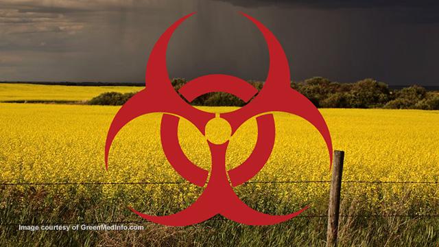 GMO ban