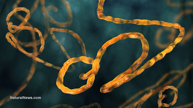 Ebola mutations