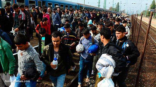 Terrorist migrants