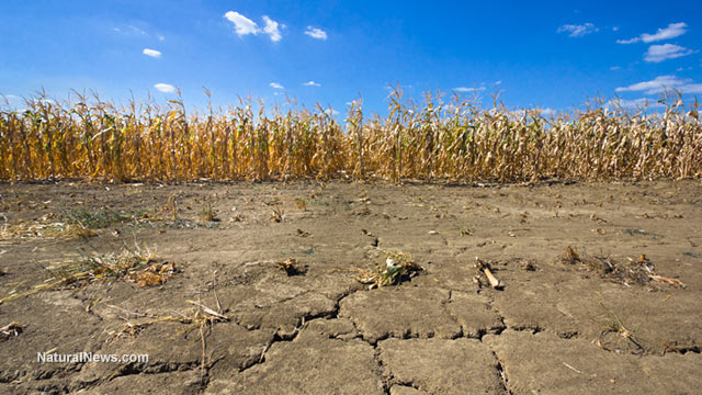 Study finds gmos destroy environment and human health for Soil environment