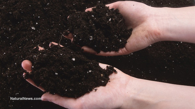 Probiotics and humic substances synergize to improve for What substances are in soil