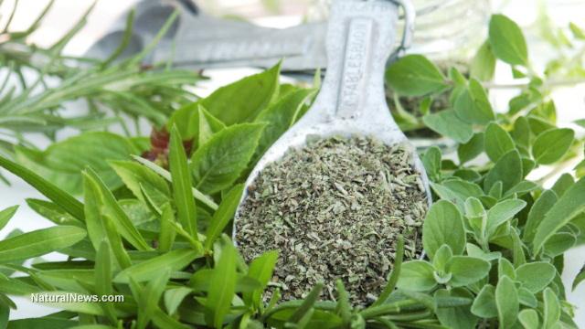 Immune-boosting herbs