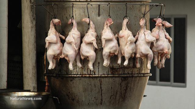 Chlorine chicken