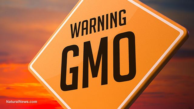 GMO bans
