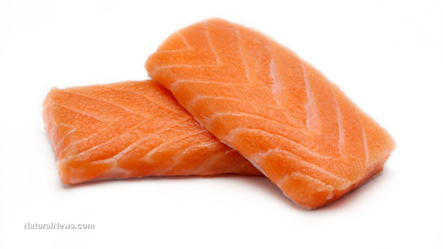 GM salmon