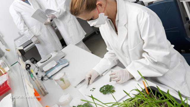 GMO safety