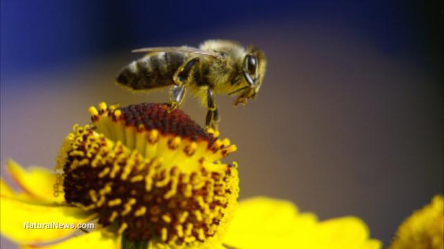 Neonicotinoid pesticides