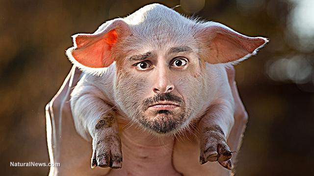 Mutant pig