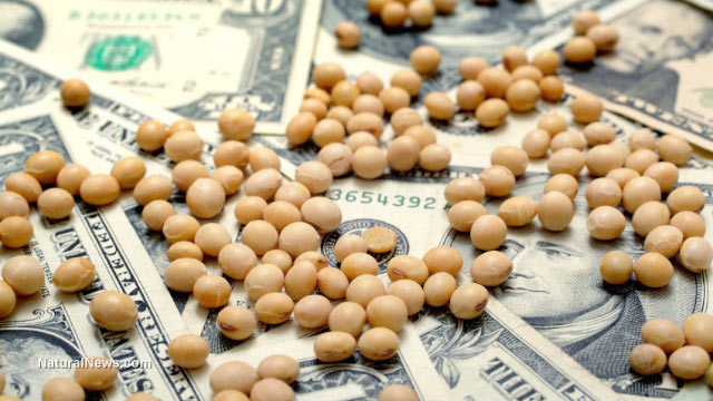 GM soybeans