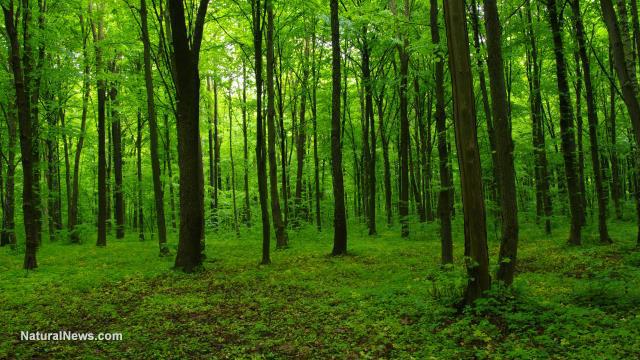 Tree deaths