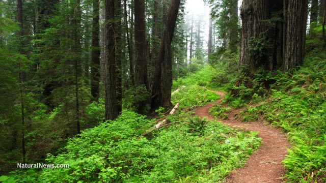 Self-awareness