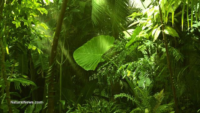 Parasitic plants