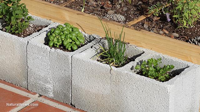 Image result for cinder blocks flower beds