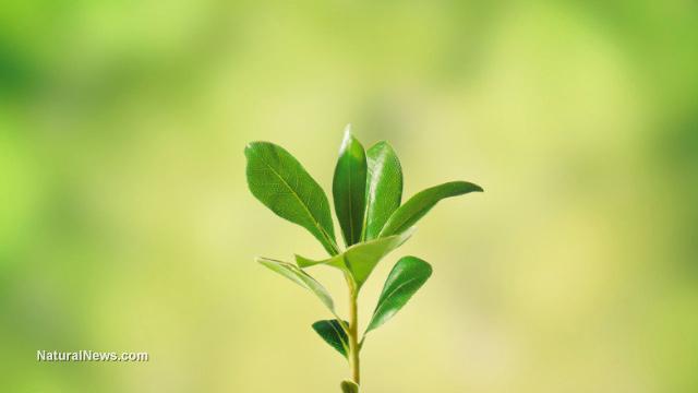 Plant senses