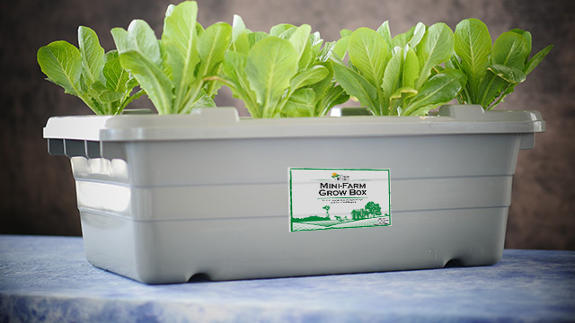 Grow Your Own Food.